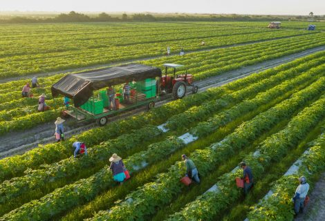 Future of organic product, food, and farming in the Agriculture industry